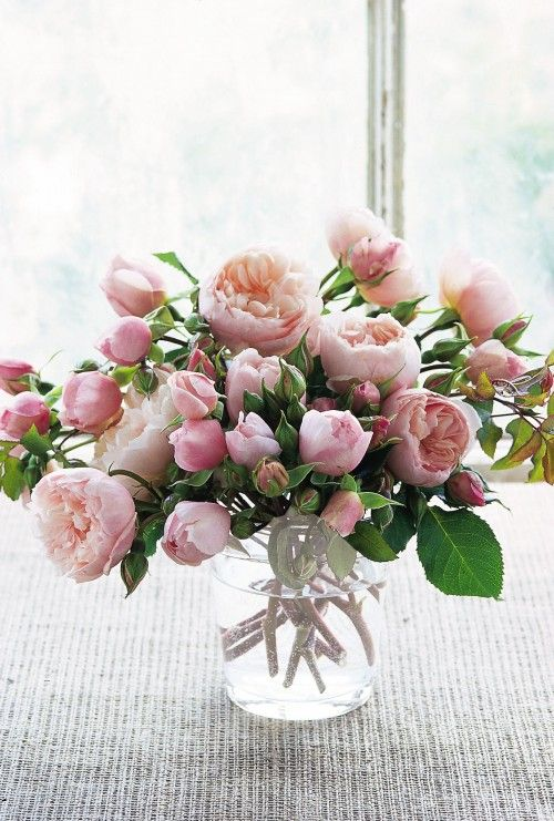 Prearranged bouquets are unquestionably sweet and thoughtful, but please, if you do nothing else for Valentine's, forget the red roses + baby's breath wrapped in cellophane. Please. All it takes to really get it right if you want to purchase flowers? Three words: David. Austin. Roses. SWOON.