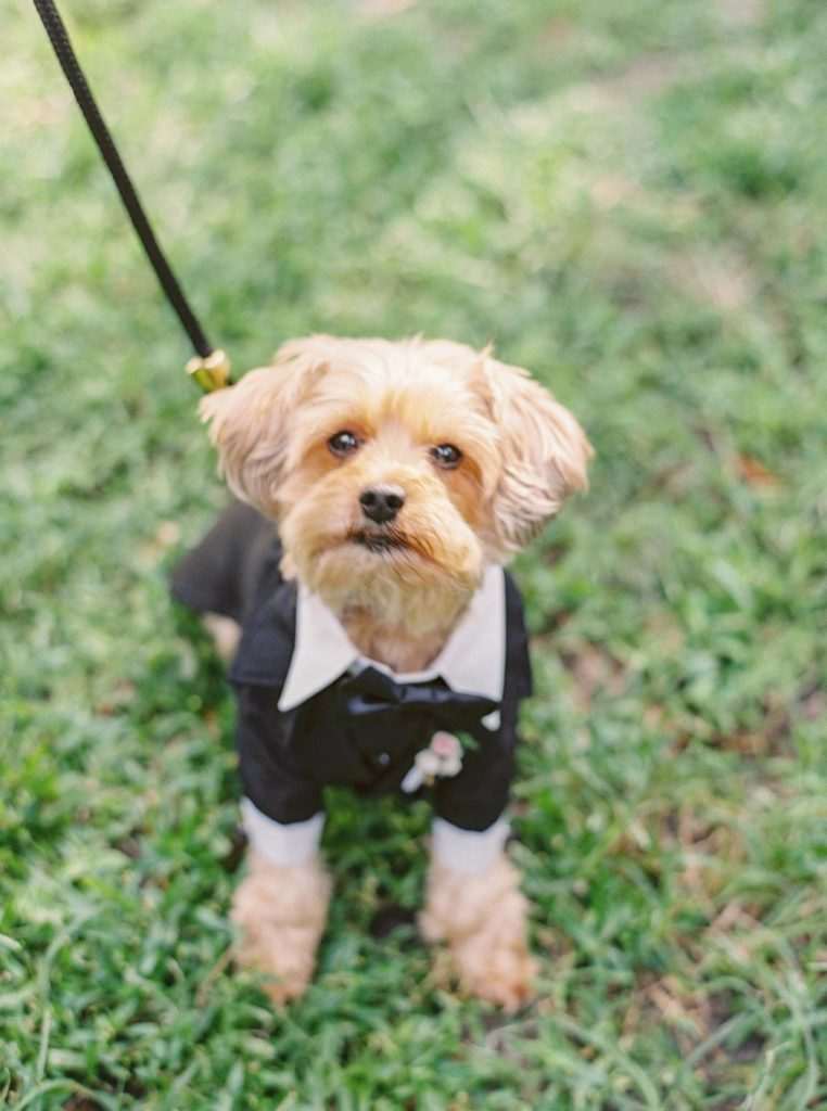 savannah-wedding-dog